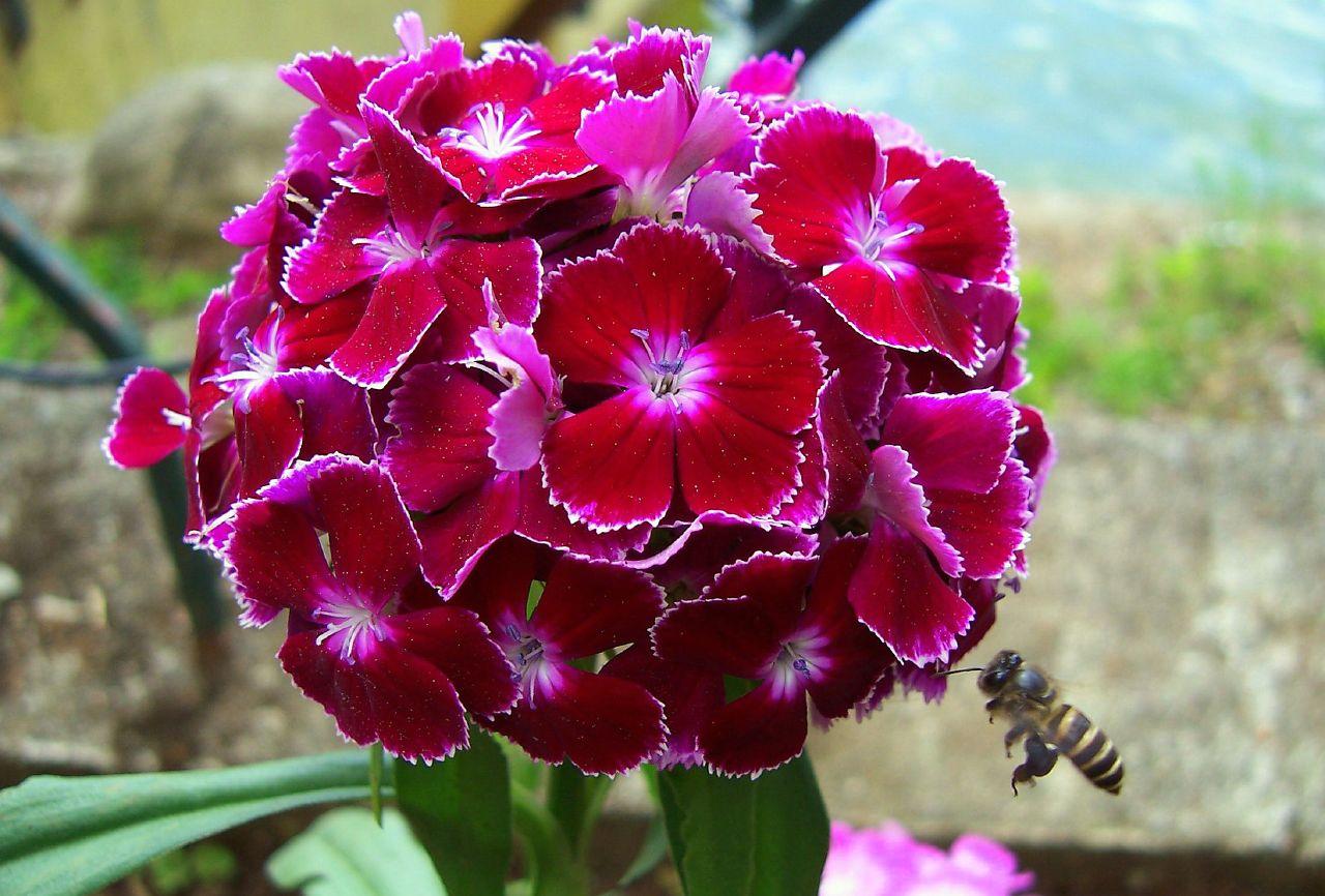 Pin By Carole Lehan Tice On Amazing Photos Pinterest Flowers