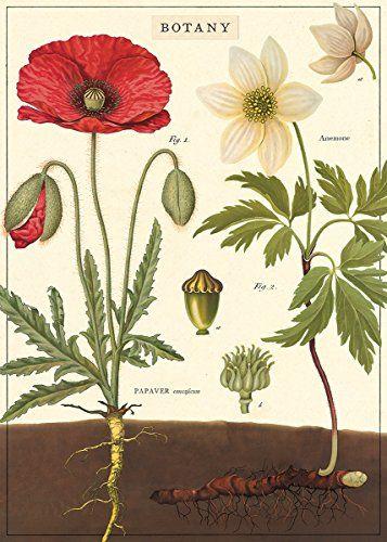 "Cavallini & Co. Botany Chart Decorative Paper Sheet 20"" x..."