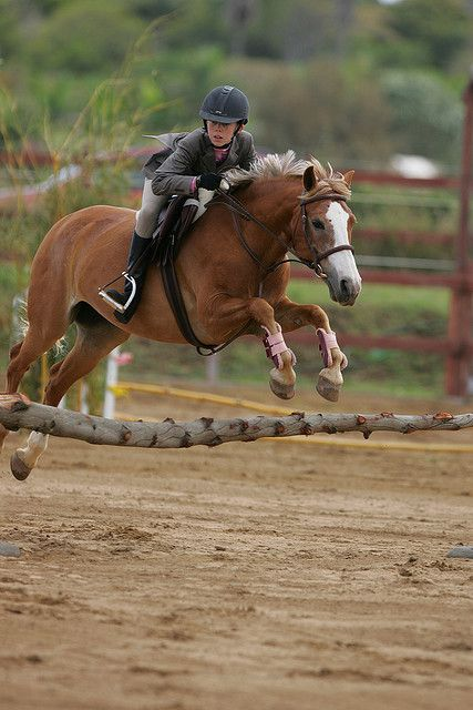 high flying hunter derby | Pony, Hawaii and Horse