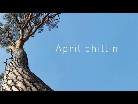 April chillin 4월의 봄 그리고 도곡동 매봉산, 영월동강, 원적산백패킹 - YouTube