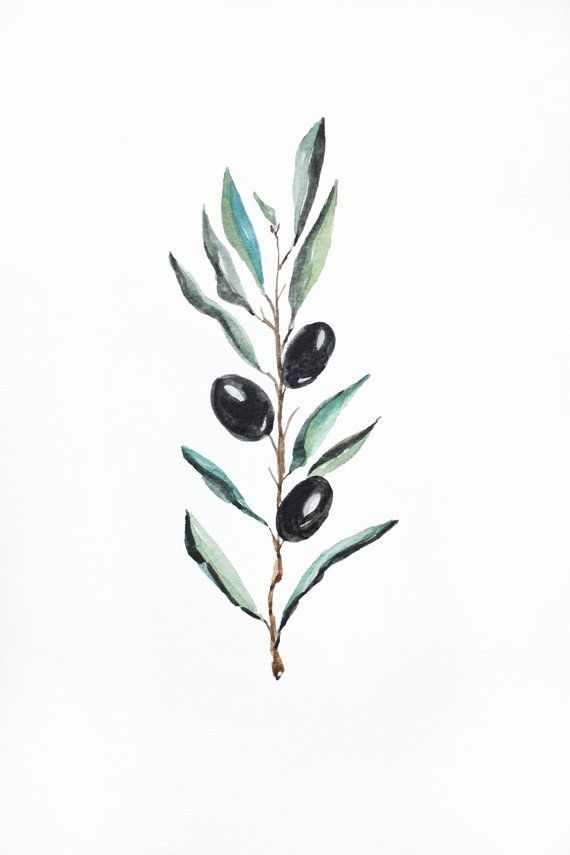Items similar to Olive PRINT Watercolor, Botanical Illustration, Olive Leaves watercolor, Olive watercolour, Kitchen Poster, Wall Art Farmhouse, print olive on Etsy