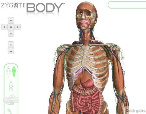 How to Use Zygote Body to See a Human Body In 3D | Human body