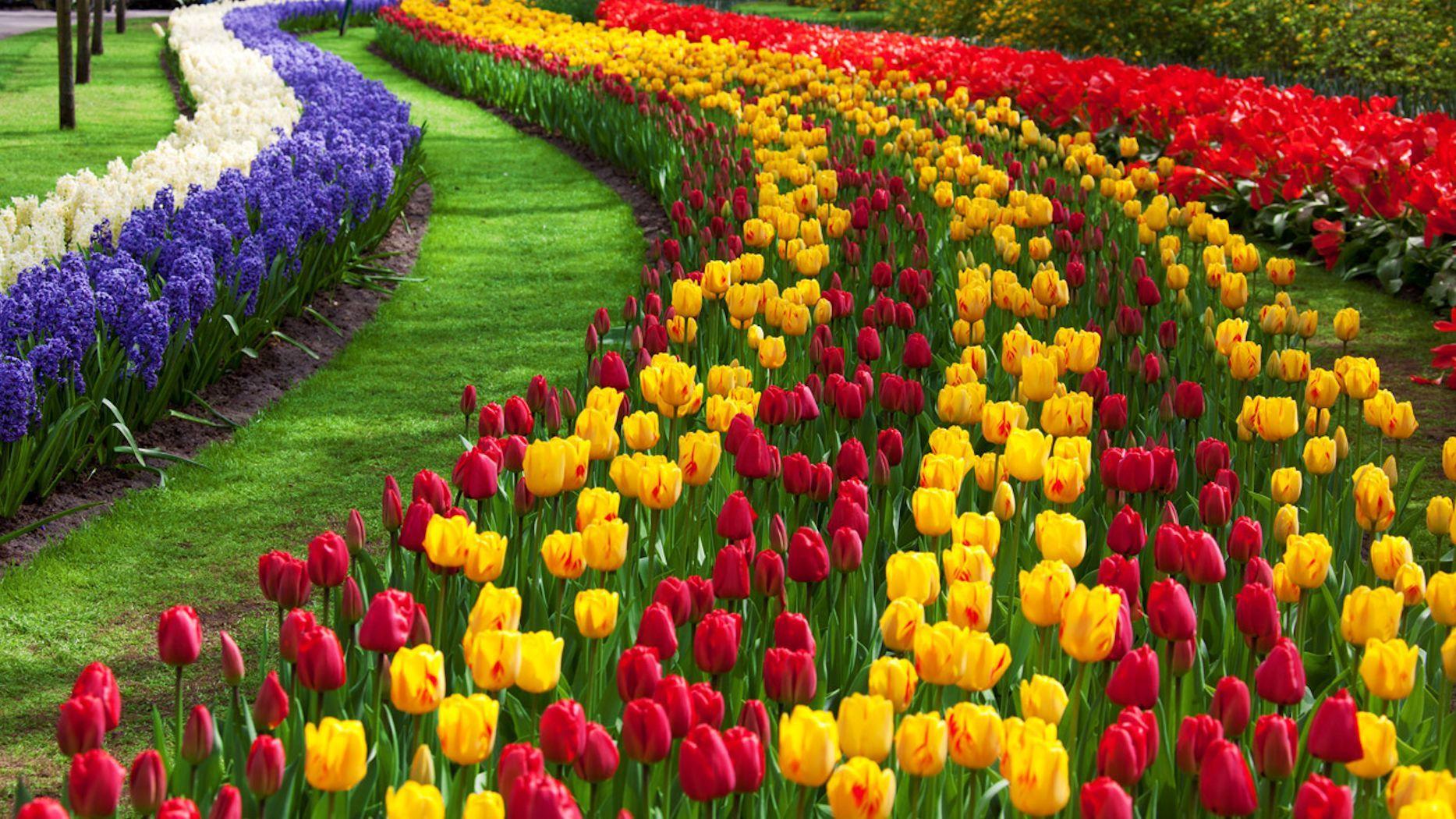 The Tulip Festival Flowers Garden Layout Tulips Garden Garden Images