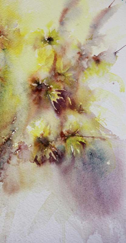 First Study of Witchhazel 2012 Jean Haines