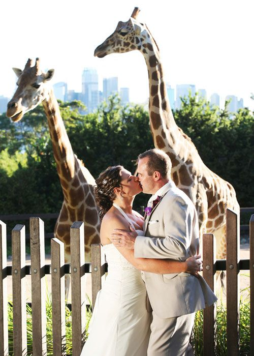 Image Detail For Taronga Zoo Wedding Venue Revitalized Obsessions The Knot