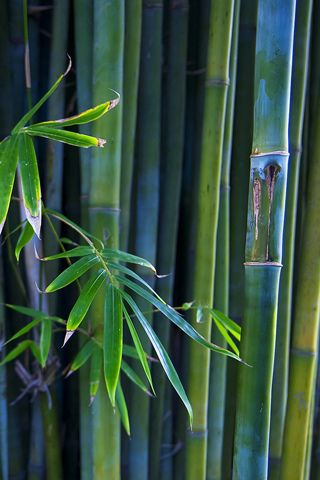 Foglia Di Bambu Remix.Pine Tree Bamboo And Plum Blossom Together Known As The 3