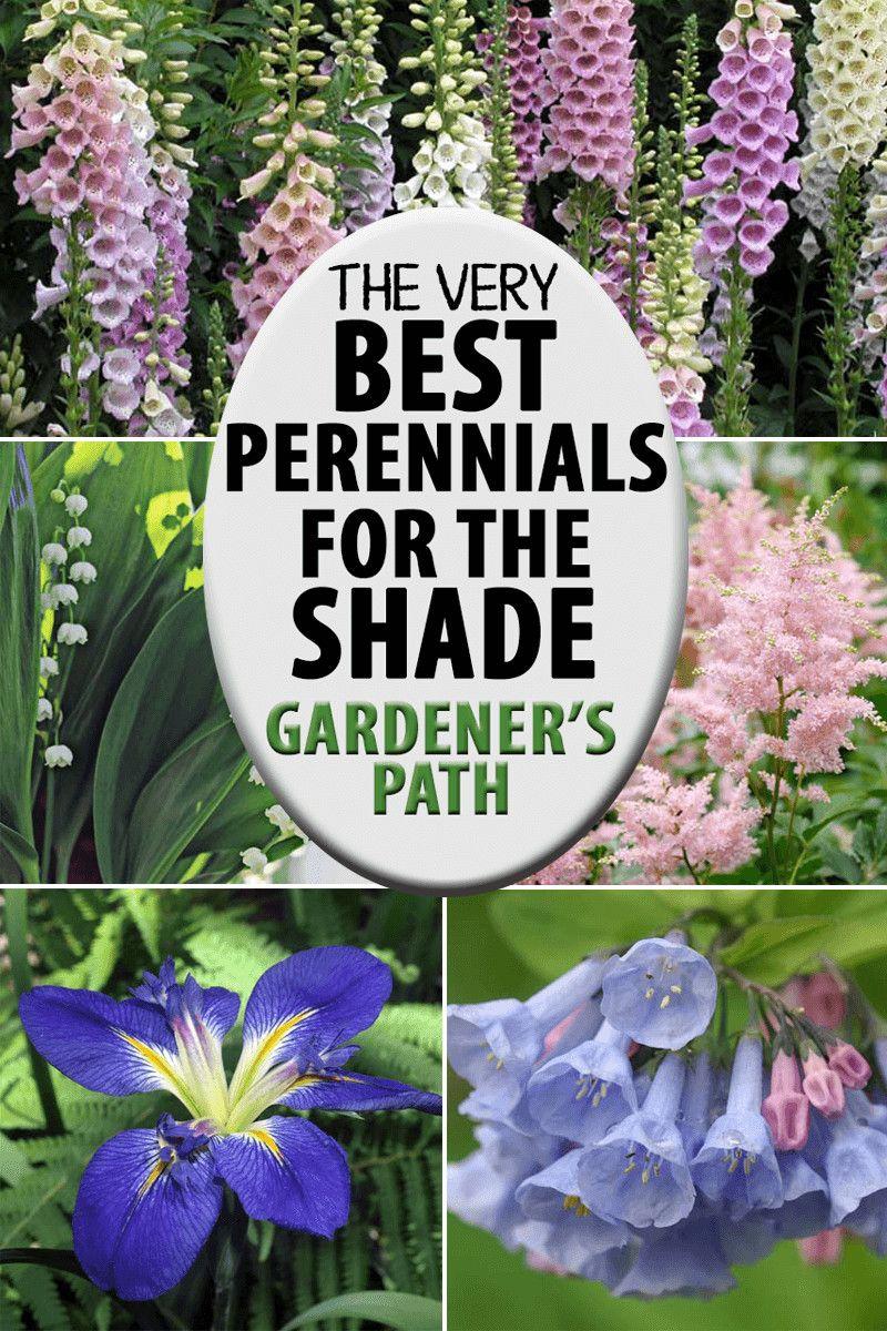 The Best Flowering Perennials for the Shade | Gard