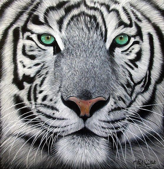 Regard Hypnotique Tigre Blanc De Siberie Wild Cats Animals Beautiful Pet Birds