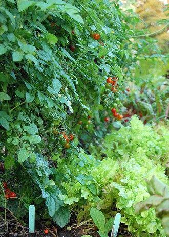 Intercropping   Hastings Nature U0026 Garden Center   Landscape Design