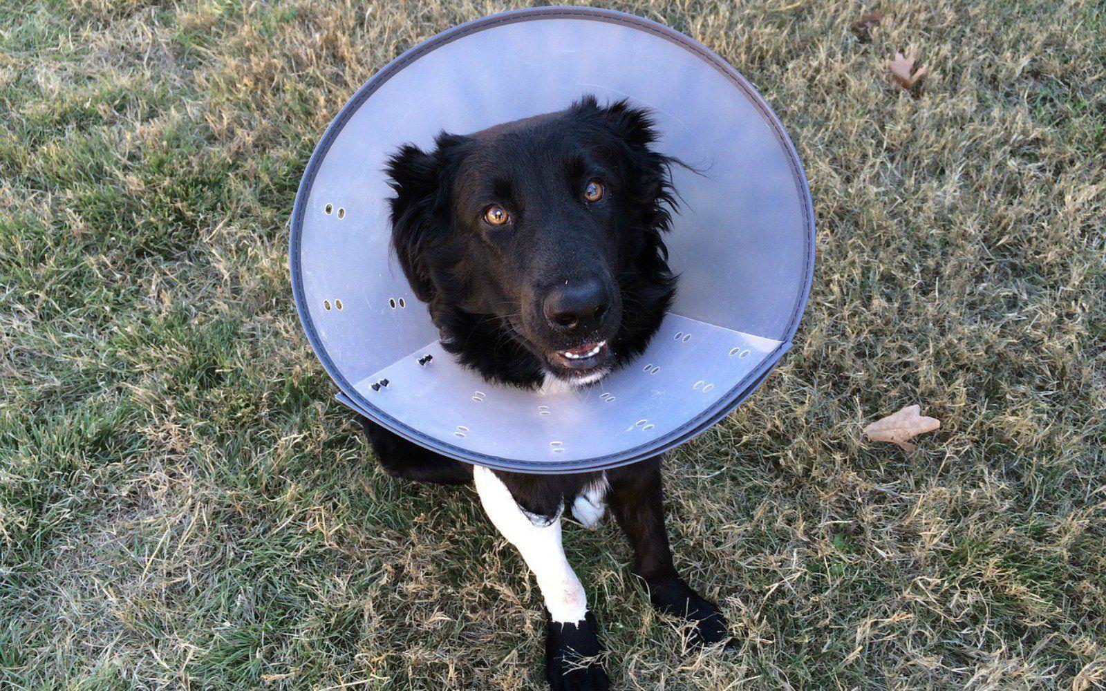 Is Pet Insurance Worth it? Dogs, Dog insurance, Pets