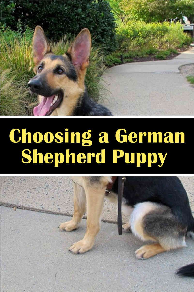 Clicker Dog Training The Best Way To An Obedient Dog German