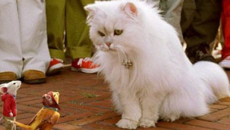 50 Greatest Movie Cats Stuart Little Movies Great Movies