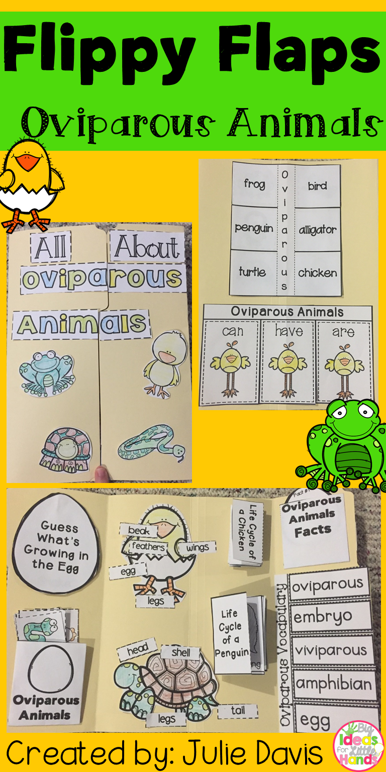 Lay Eggs What Animals Hatch From Eggs This Is Great Way To Get Your Students Learning About Oviparous Animals In Fun Handson Interactive Way Pinterest Oviparous Animals Activities Interactive Notebook Lapbook My Tpt