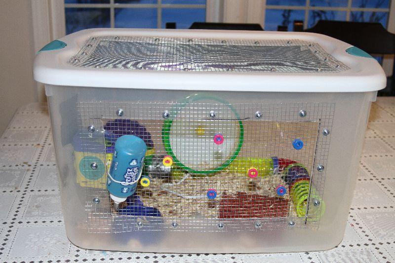 Pin By Kristen Tarver On Snakes Hamster Diy Cage Hedgehog Cage