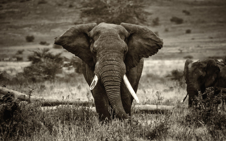 Elephant In Africa Wallpapers Images Bildevegg