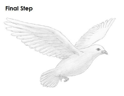browse latest beautiful collection of dove drawing images realistic art pencil sketch photos fan artwork drawn by professional artist in high quality