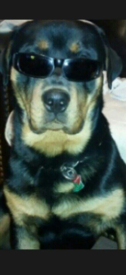 My bodyguard :)