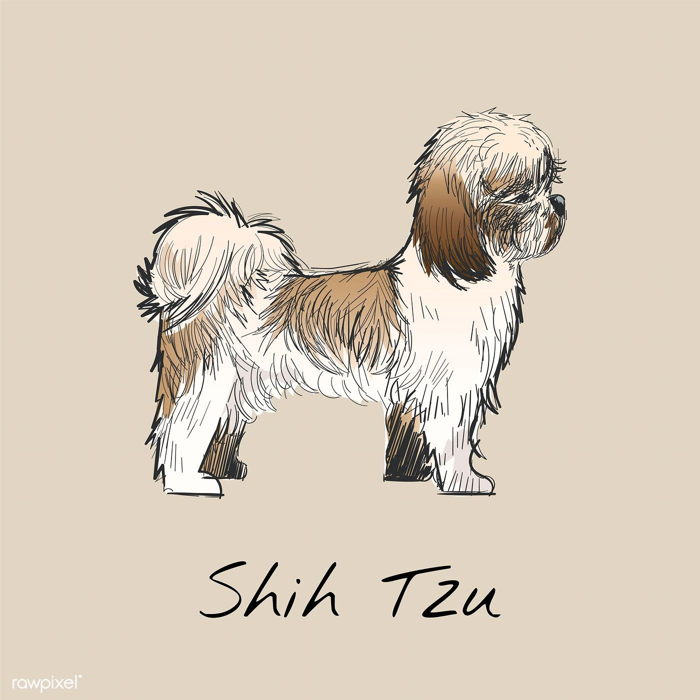 Illustration Drawing Style Of Dog Premium Image By Rawpixel Com Niwat In 2020 Drawings Illustration Fashion Drawing