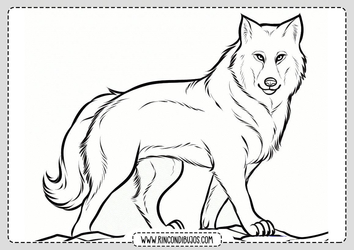 Dibujos De Lobos Animados Para Colorear Busqueda De Google Wolf Colors Animal Coloring Pages Wolf Drawing