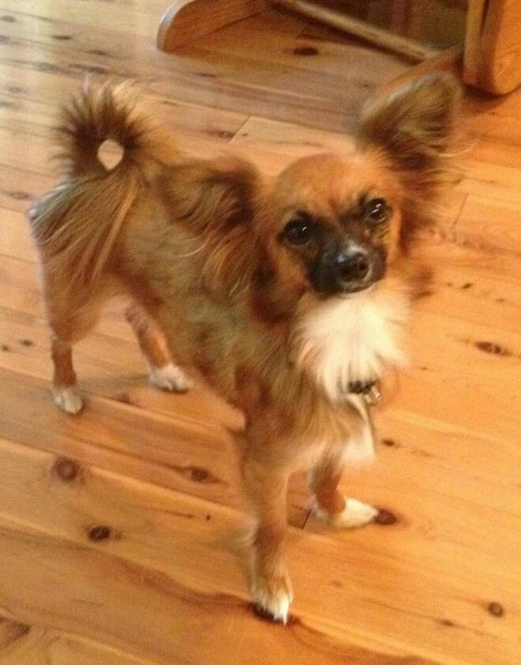 Adopt Adelaide On Dog Adoption