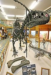Dinosaur Museums Suffer in the US Recession