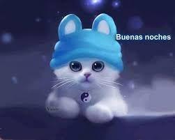 foto de gato dando las buenas noches(good night)