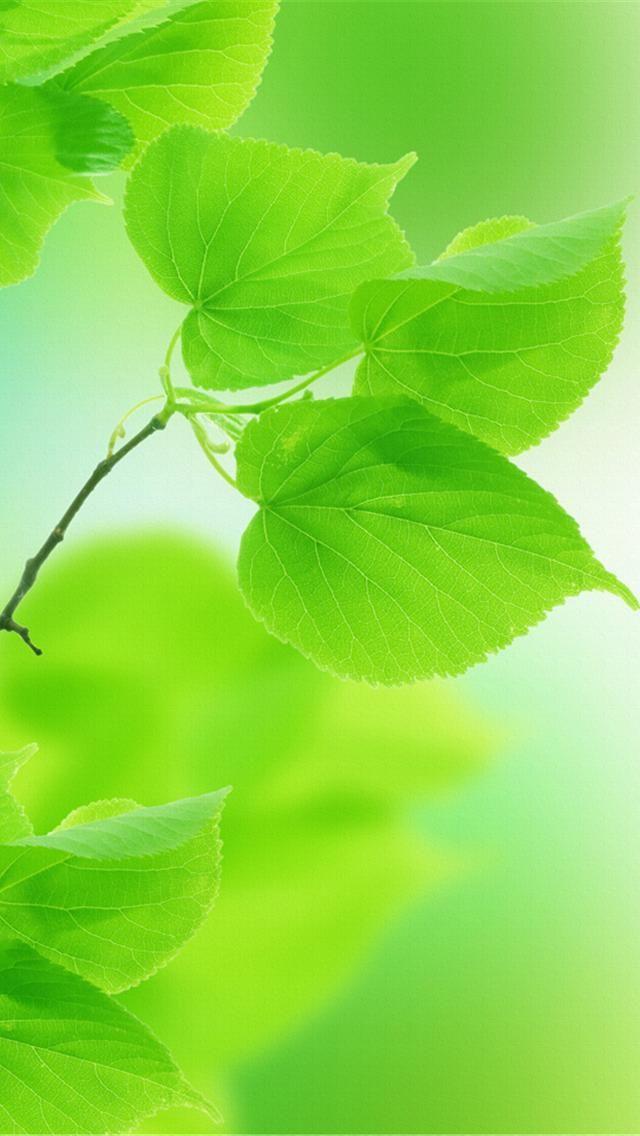 GREEN HEART SHAPED LEAVES, IPHONE WALLPAPER BACKGROUND | Flora beauty | Green leaf wallpaper ...