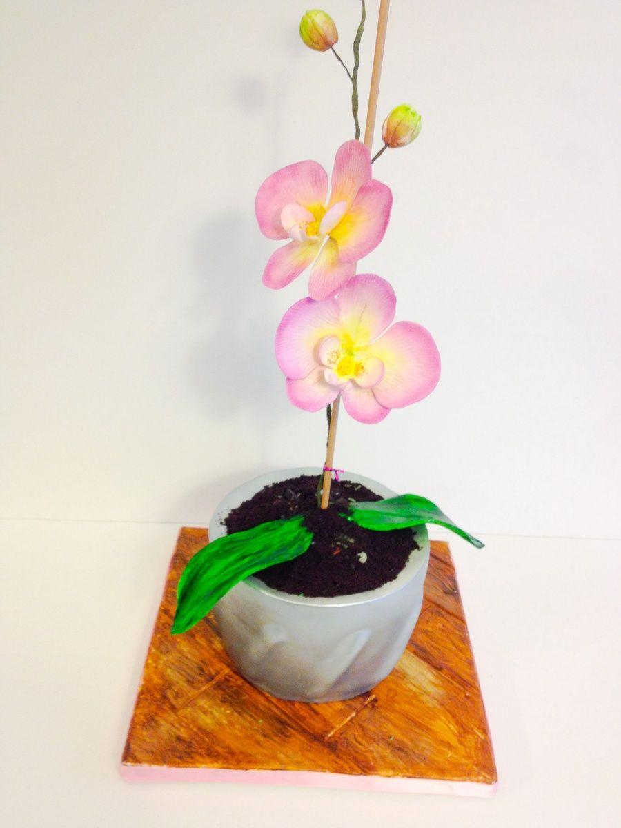 Beautiful Flowers 2019 Orchid Flower Pots Beautiful Flowers