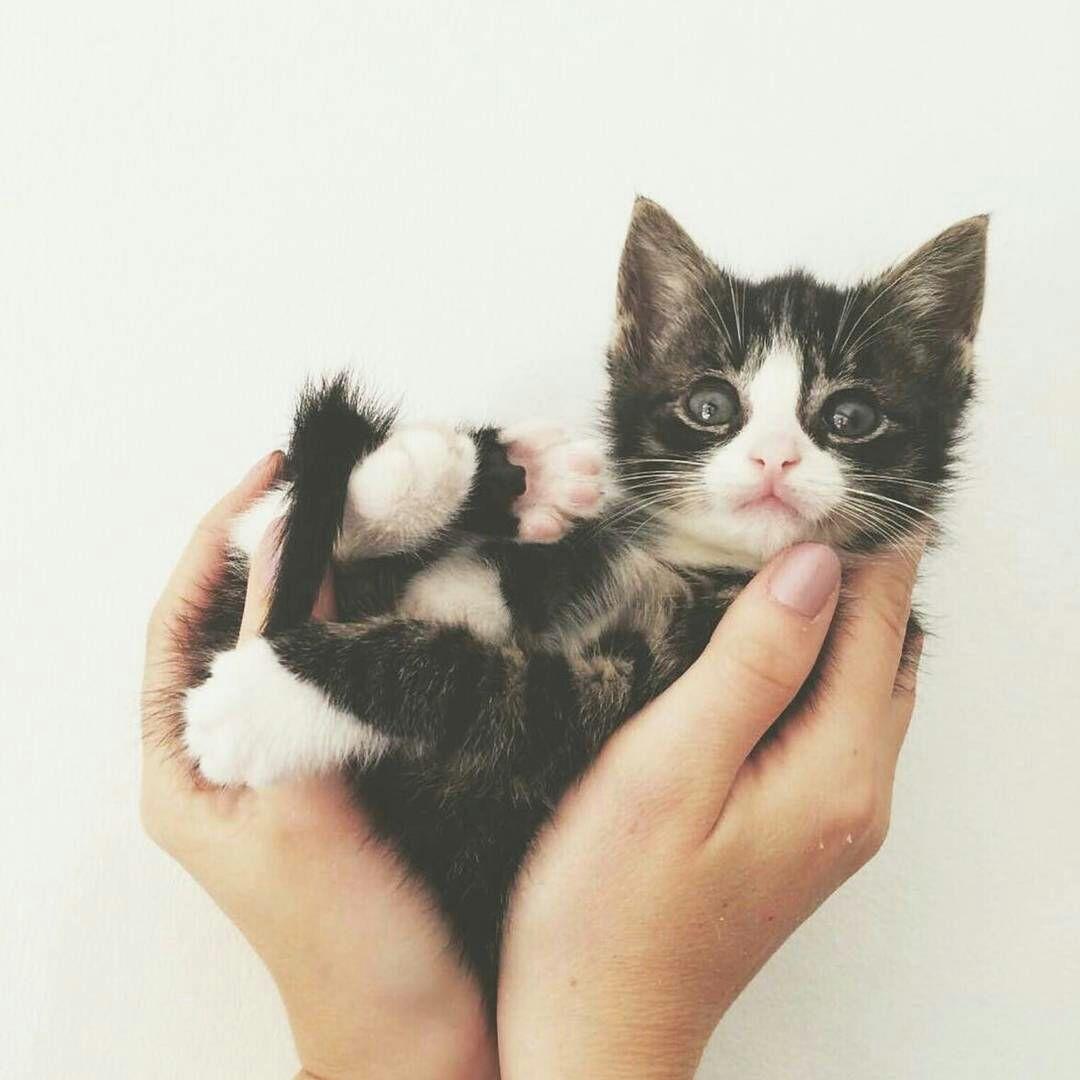 What a precious kitty Kittens cutest, Pics of cute cats