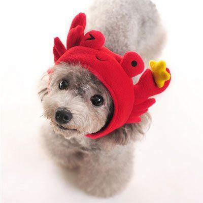 Dog Halloween Costume Crab Hat Medium Http Www Thepuppy Org