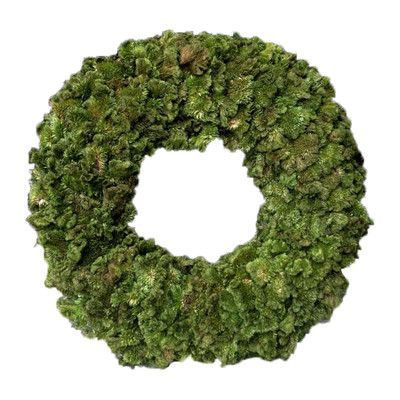 Mills Floral Celosia Wreath Color: Green