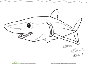 Color The Mako Shark Fish Pinterest Shark Shark Week And