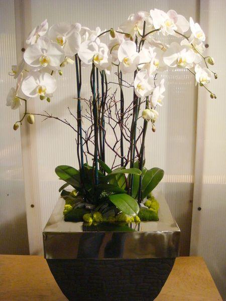 Orchid planter arrangements google search plants for Deko topfpflanzen
