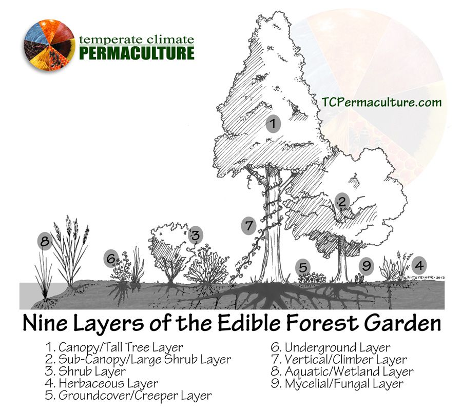 A good diagram for permaculture with examples of good varieties for