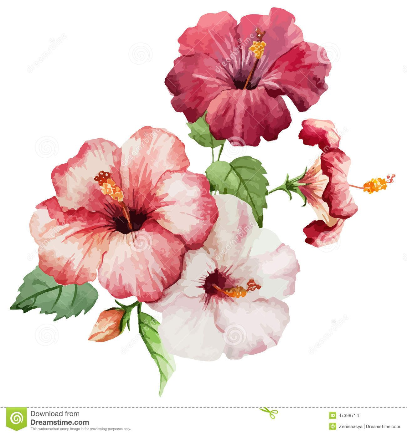 Hibiscus2 Download From Over 52 Million High Quality Stock