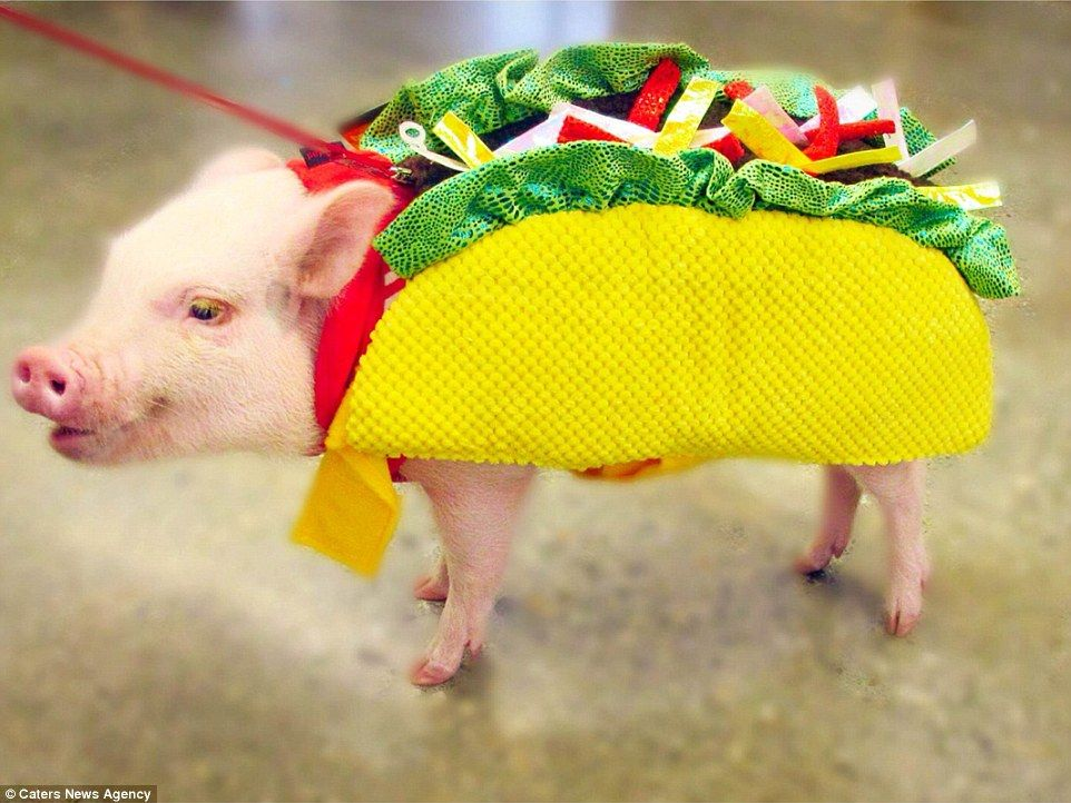 Adorable costumes given to animals on Dress up your Pet