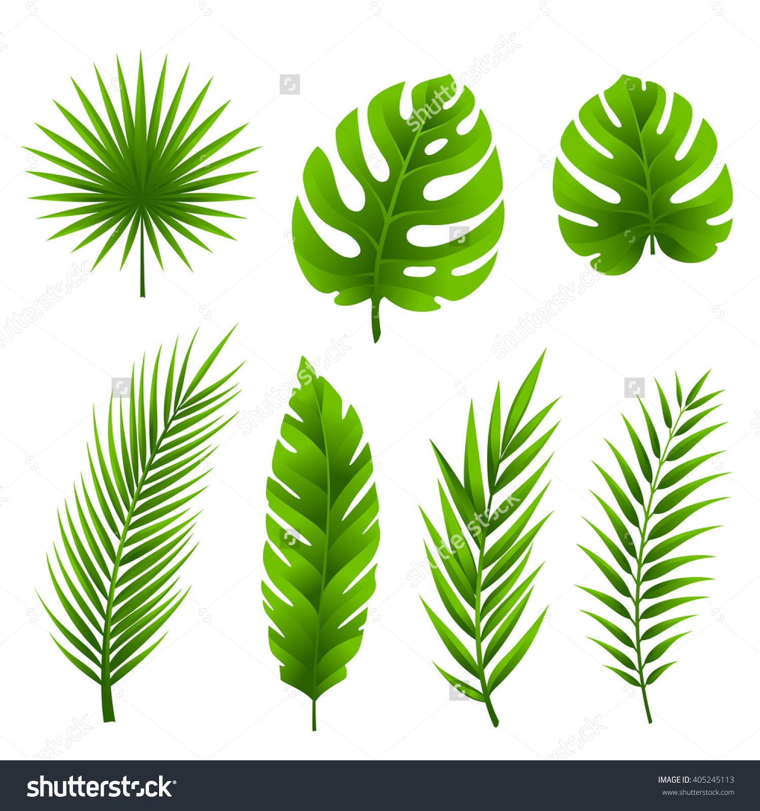 jungle tropical palm tree leaves collection stock vector