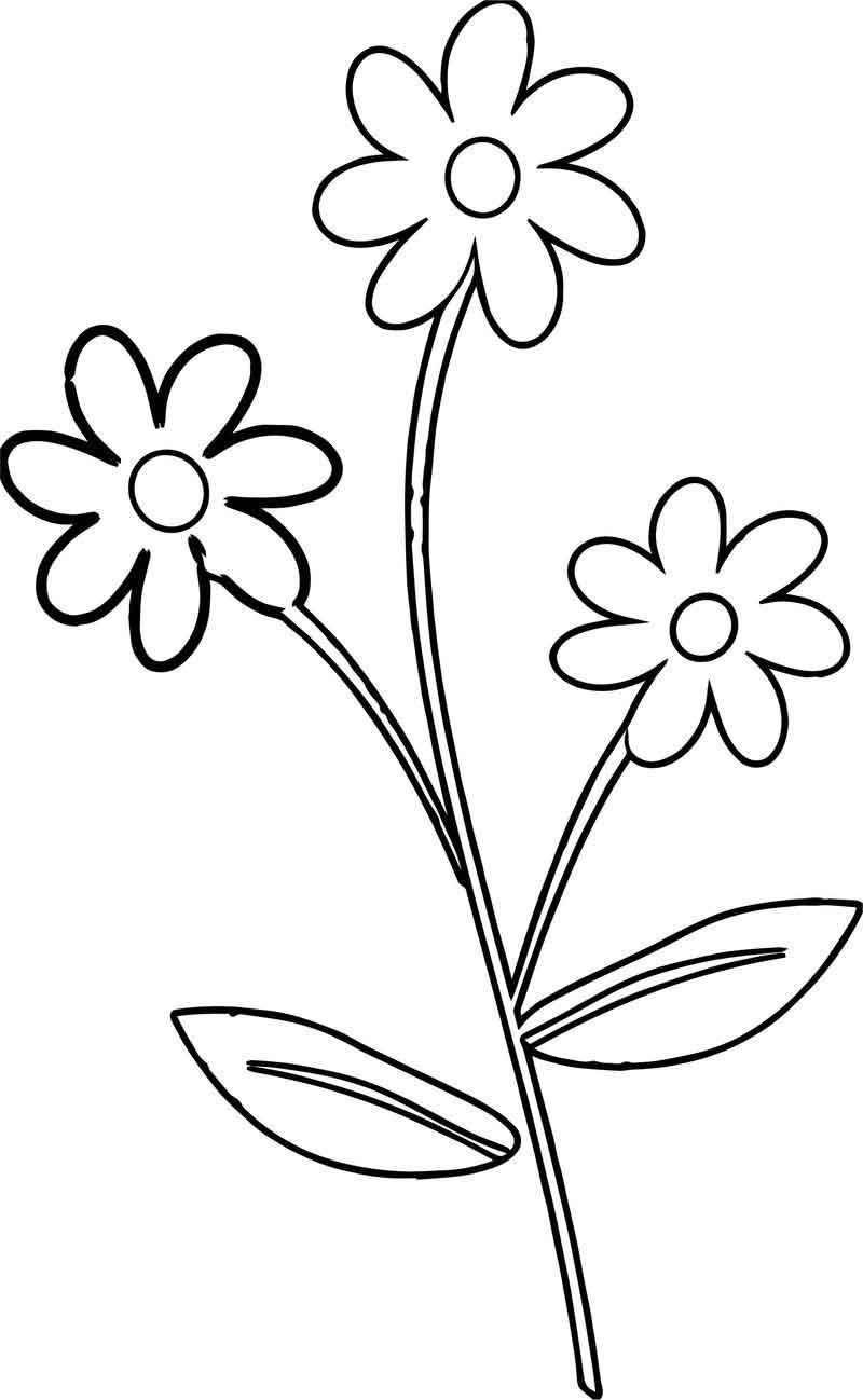 Cute Flower Border Flowers Coloring Page Printable Flower Coloring Pages Flower Coloring Pages Coloring Pages