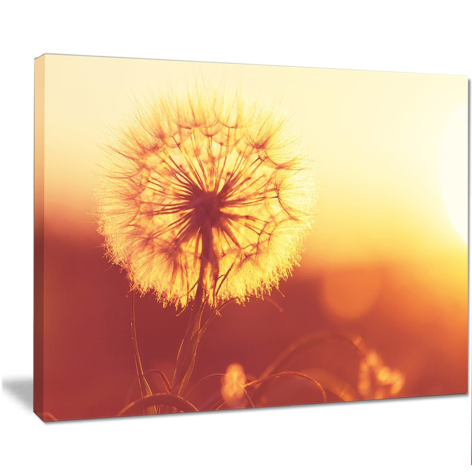 Blossom Dandelion (Yellow) Flower on Brown - Large Flower Wall ...
