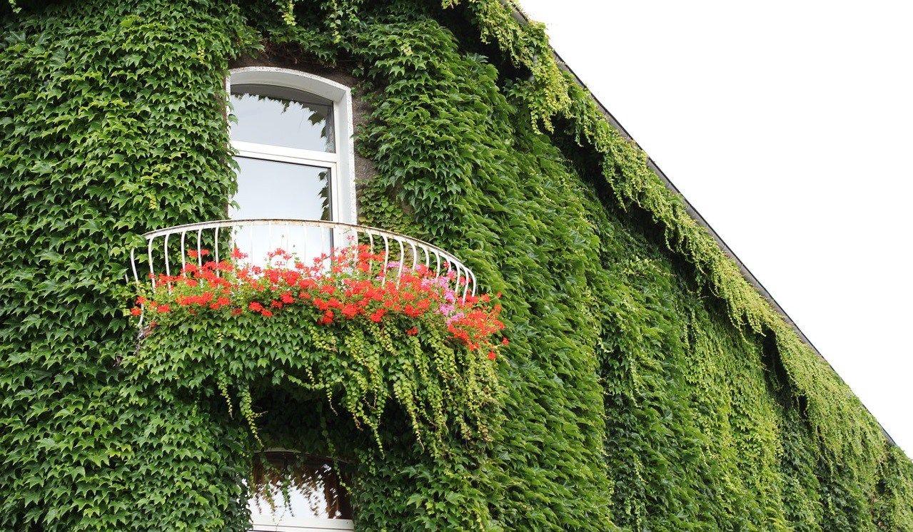 10 piante rampicanti sempreverdi per il tuo giardino