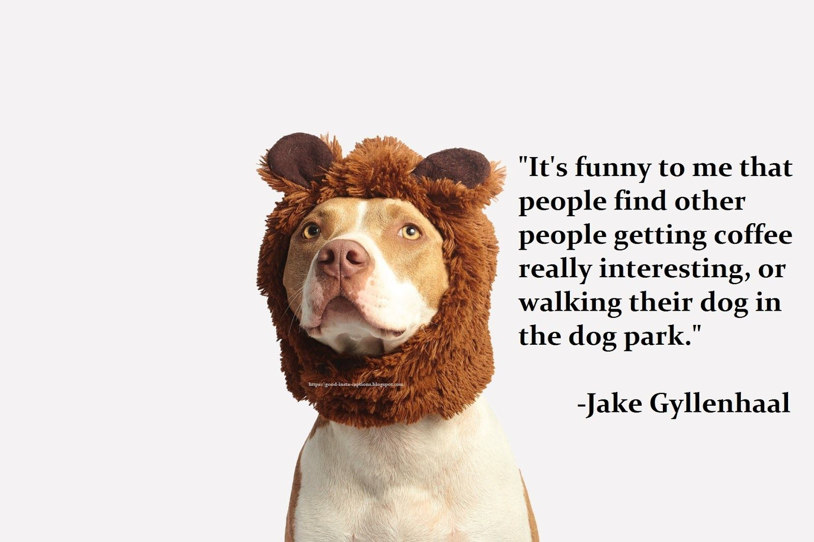 Funny Dog Quotes By Jake Gyllenhaal Dog Instagram Captions Dog Quotes Funny Instagram Picture Quotes