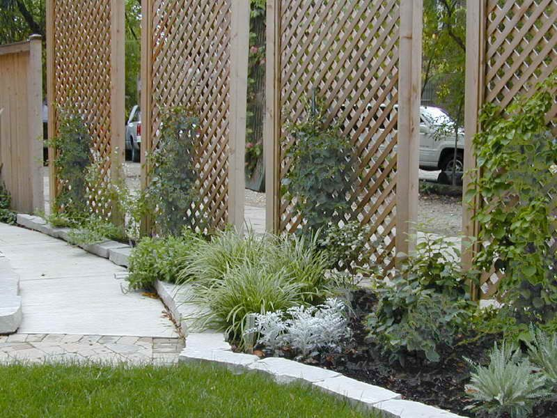 Privacy lattice screen not sure what the vertical plant for Lattice yard privacy screen