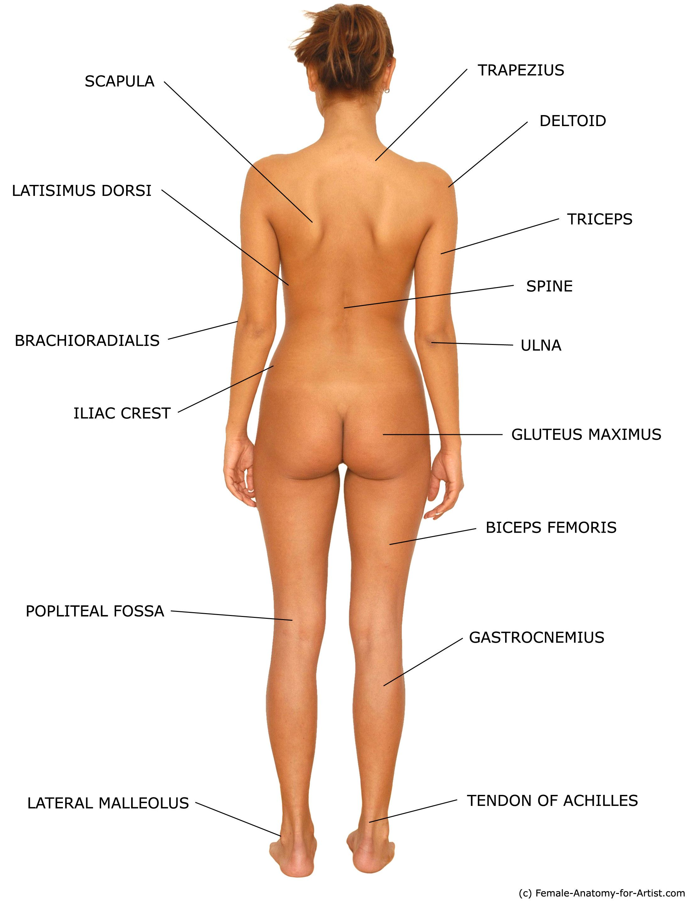 Image Result For Female Anatomy Reference Female Anatomy