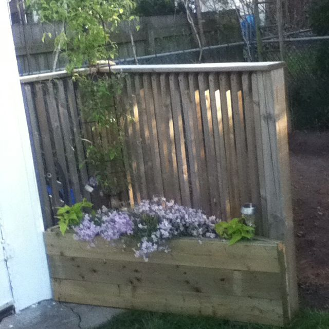 Planter box made out of pressure treated wood Fingers crossed my clematis survives its transplant