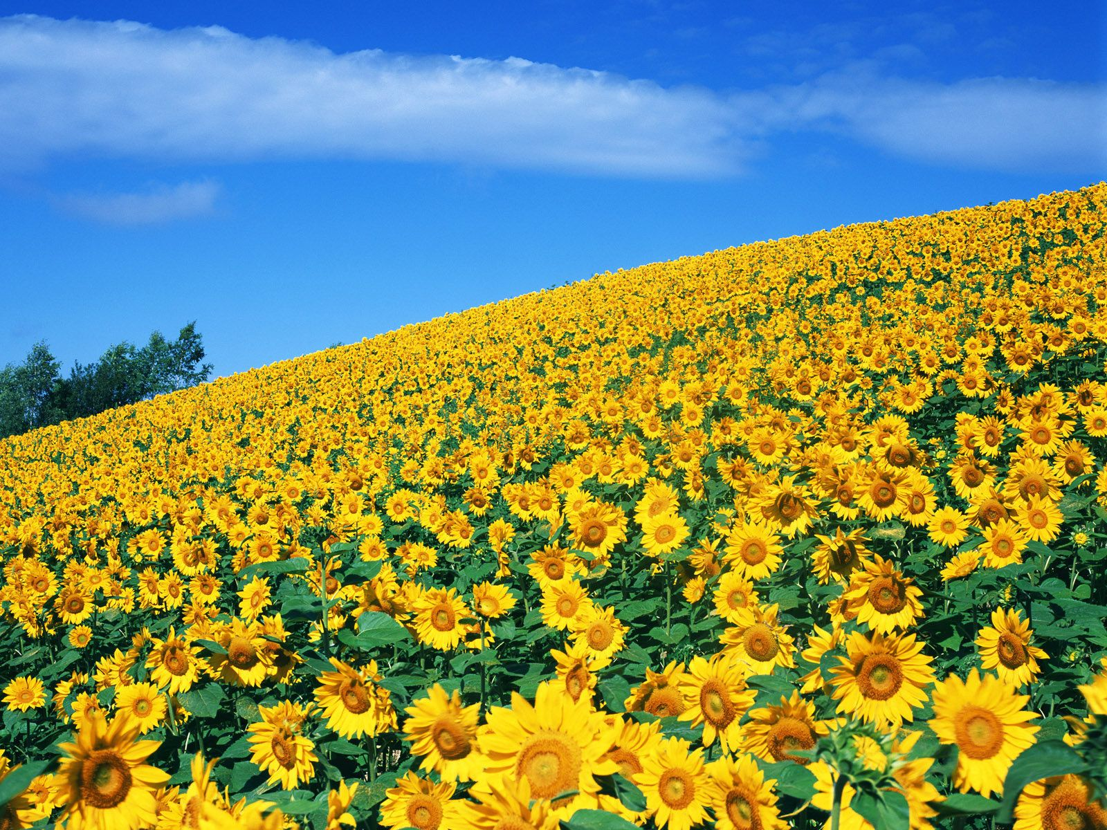 3 this is the best day the world has ever seen tomorrow will be gorgeous field of yellow flowers wallpaper mightylinksfo Images