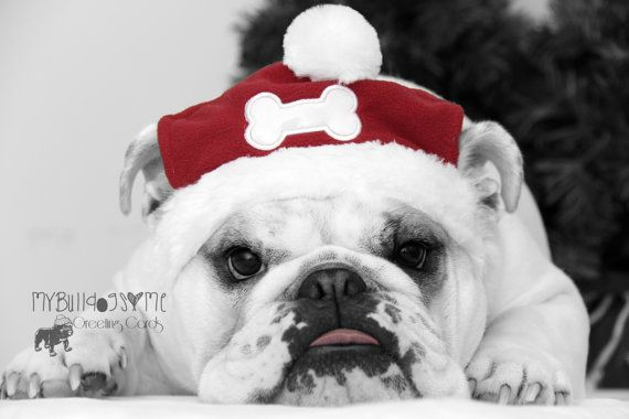 Card 21 Santa Paws English Bulldog Christmas Greeting Card