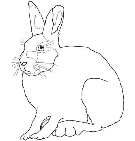Arctic Hare Coloring Page From Hares Category Select From 26278
