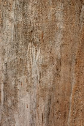 How To Finish Hardwood Floors With Cedar Oil Cleaning Wood