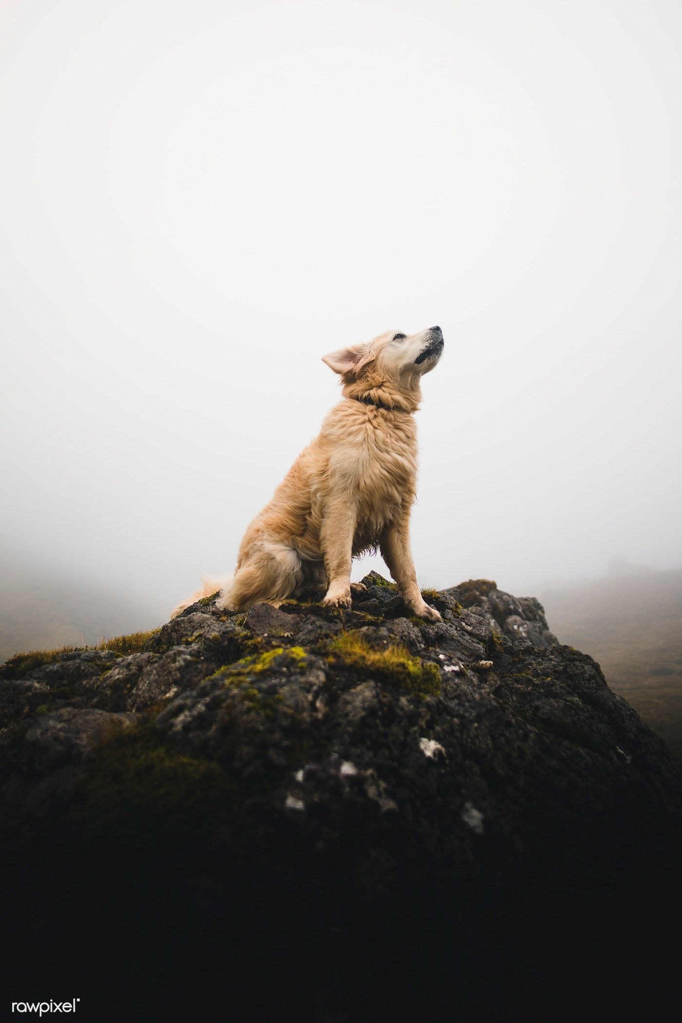The dog sitting on a rock among the misty Scottish