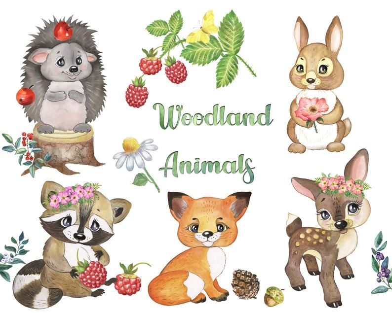 Woodland Animals Clipart Forest Animal Clip Art Woodland Creatures Woodland Nursery Clipart Png Animal Clipart Safari Baby Animals Forest Animals